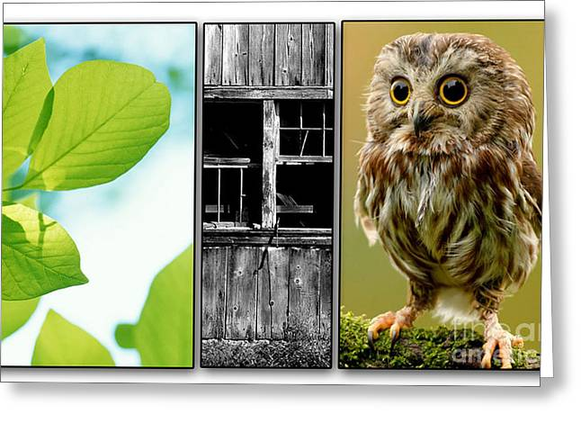 Leaves Barn Owl Greeting Card