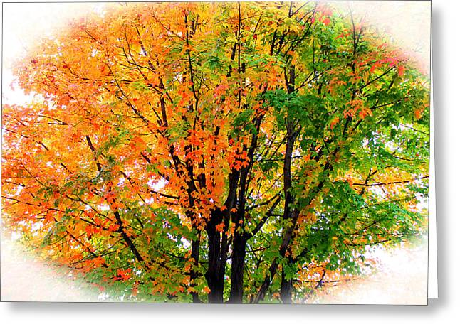 Leaves Changing Colors Greeting Card by Cynthia Guinn
