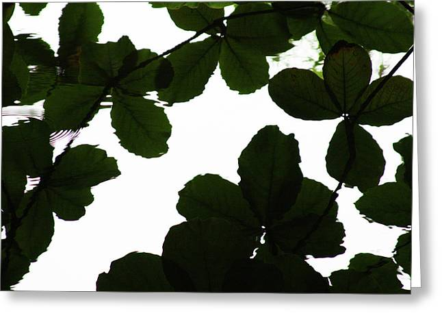 Leaves Drifting Greeting Card by James Knight