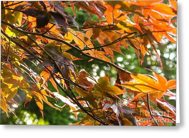 Leaves Greeting Card by Ernest Puglisi