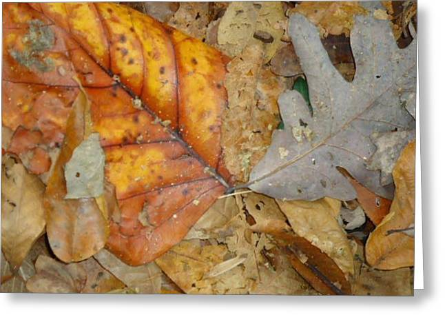 Leaves Greeting Card by Glenn Calloway