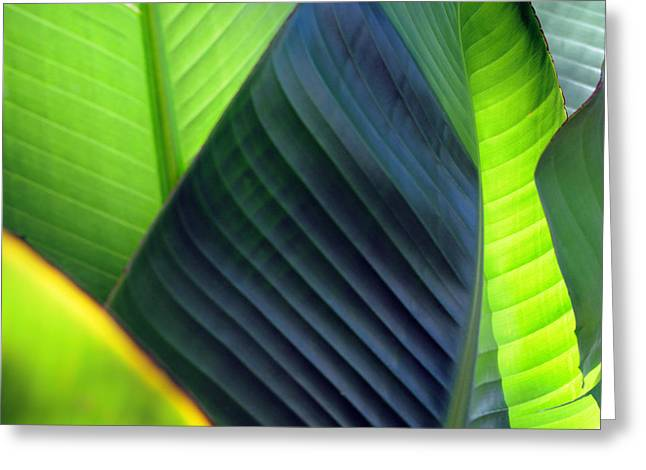 Greeting Card featuring the photograph Leaves - Green by Haleh Mahbod