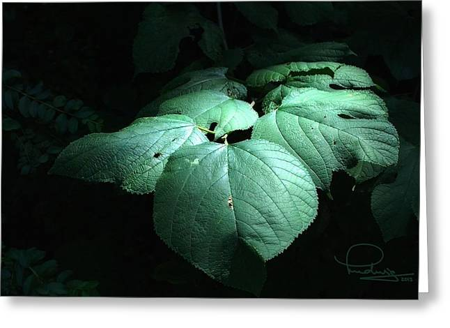 Greeting Card featuring the photograph Leaves In A Patch Of Sunlight by Ludwig Keck