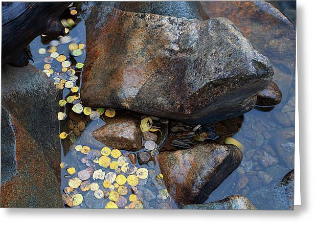 Leaves In A Stream Greeting Card by Jim Garrison