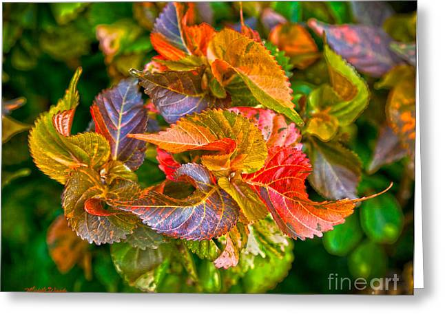Leaves In Motion Greeting Card