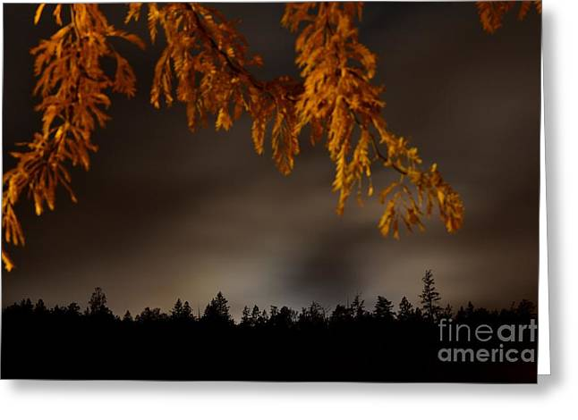 Leaves In The Night II Greeting Card by Phil Dionne