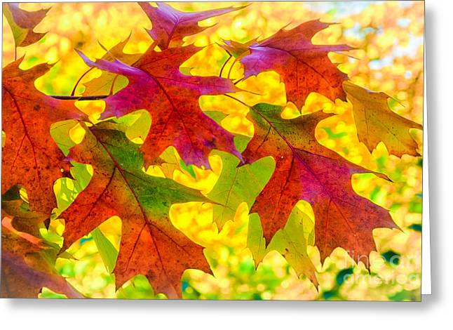 Leaves Greeting Card by Janis Knight