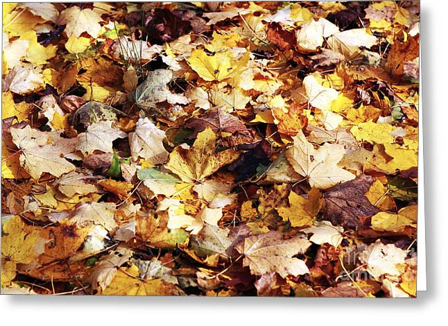 Leaves Greeting Card by John Rizzuto