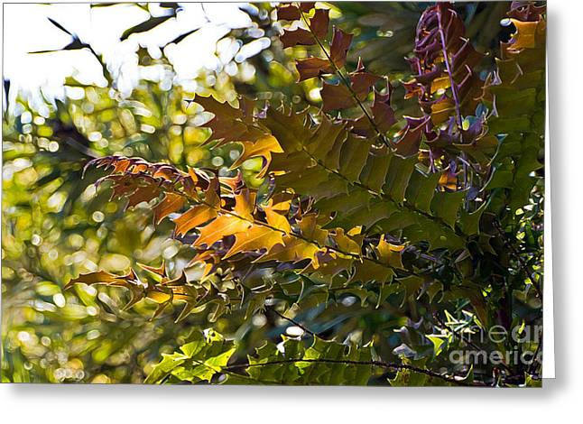 Leaves Greeting Card by Kate Brown