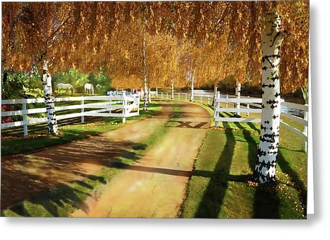 Leaves Of Change Greeting Card by David M ( Maclean )