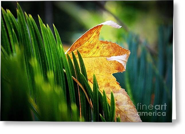 Leaves Of Grass Greeting Card by Ellen Cotton