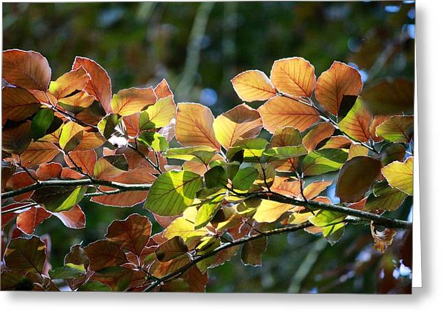 Leaves Of Light Greeting Card by Tim Rice