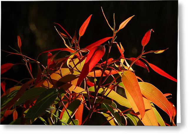 Leaves Of Red And Gold Greeting Card