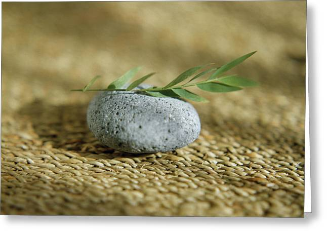 Leaves On A Pebble Greeting Card by Cristina Pedrazzini/science Photo Library