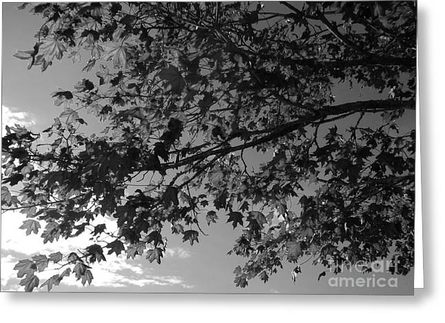 Greeting Card featuring the photograph Leaves On A Tree by Laura  Wong-Rose