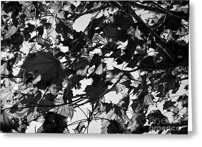 Greeting Card featuring the photograph Leaves On A Tree Ll by Laura  Wong-Rose