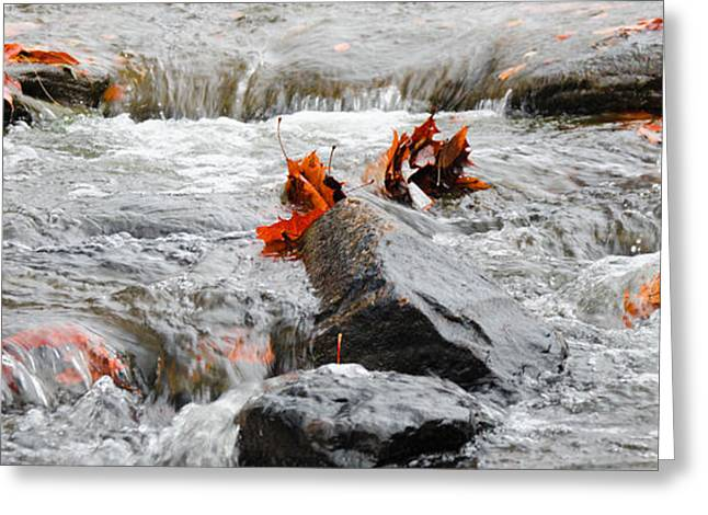 Leaves On Falling Water Greeting Card by Mark Bowmer