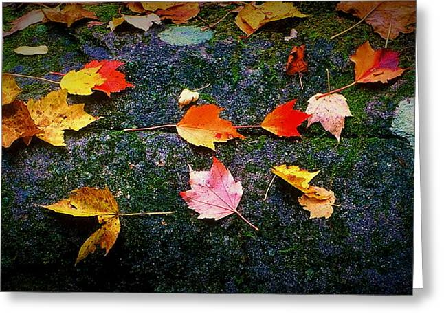 Leaves On Rock  Greeting Card