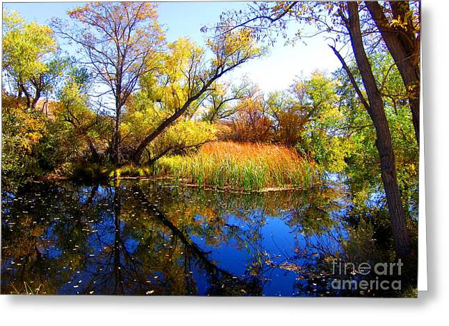 Leaves On The Pond Greeting Card