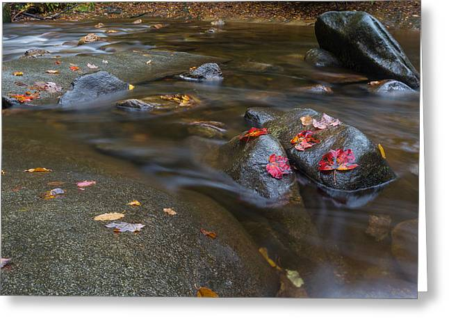 Leaves On The River Path Greeting Card