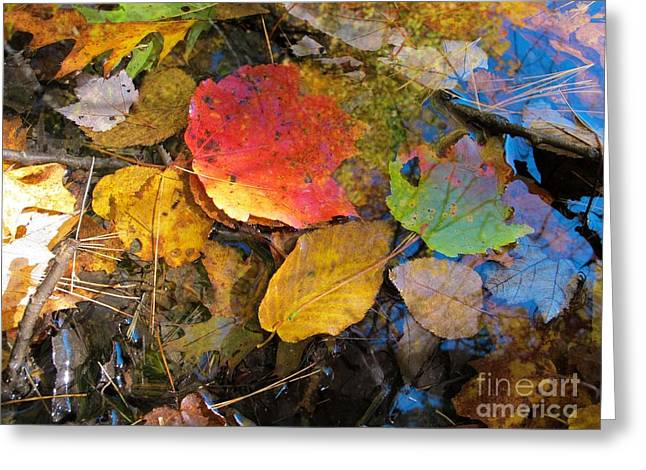 Leaves On Water Greeting Card by Linda Marcille