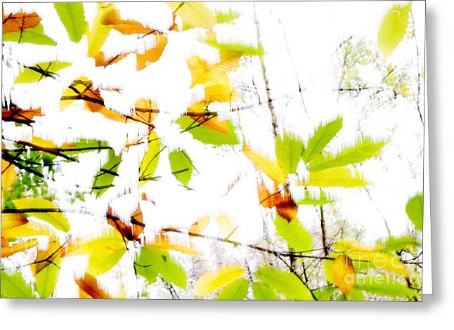 Leaves Splash Abstract 2 Greeting Card by Natalie Kinnear