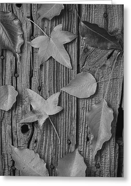 Leaves Still Life Greeting Card by Garry Gay