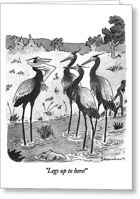Legs Up To Here! Greeting Card by Danny Shanahan