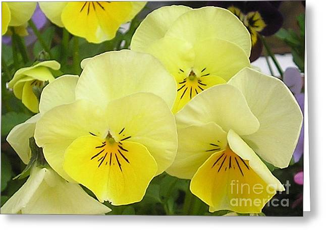 Lemon Beauties Greeting Card by Joanne Simpson
