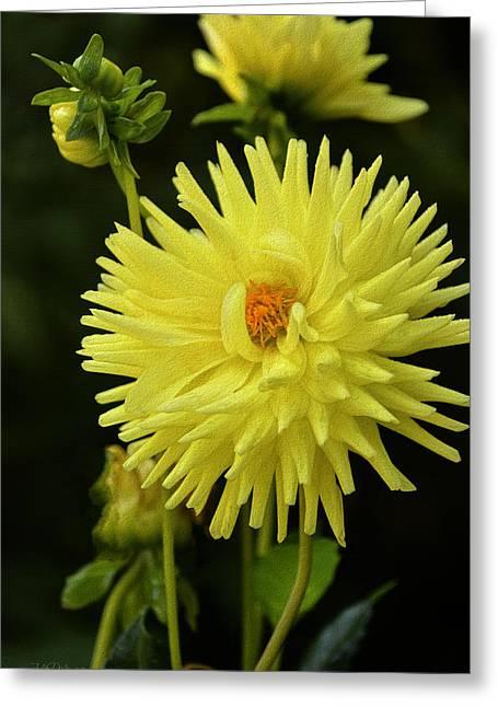 Lemon Tart Dahlia Greeting Card by Julie Palencia