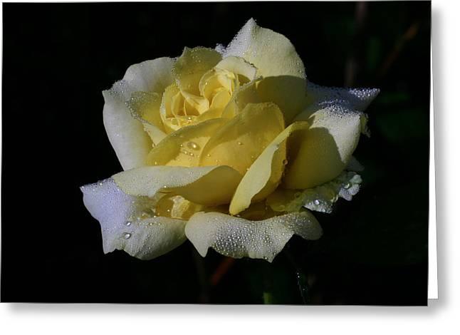 Lemoncandy Greeting Card by Doug Norkum