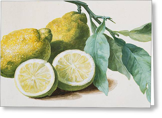 Lemons Greeting Card by Pierre Joseph Redoute