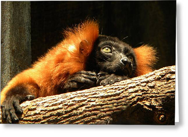 Lemur In Longing Greeting Card by Phillip W Strunk