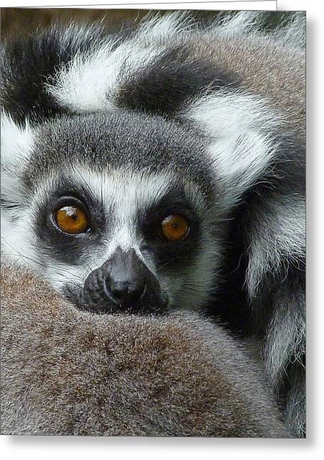 Lemur Leisure Time Greeting Card by Margaret Saheed