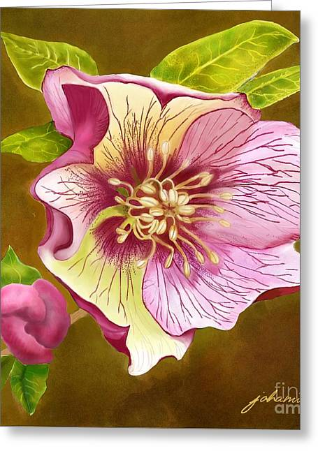 Lenten Rose Greeting Card by Joan A Hamilton