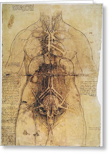 Leonardo: Anatomy, C1510 Greeting Card by Granger
