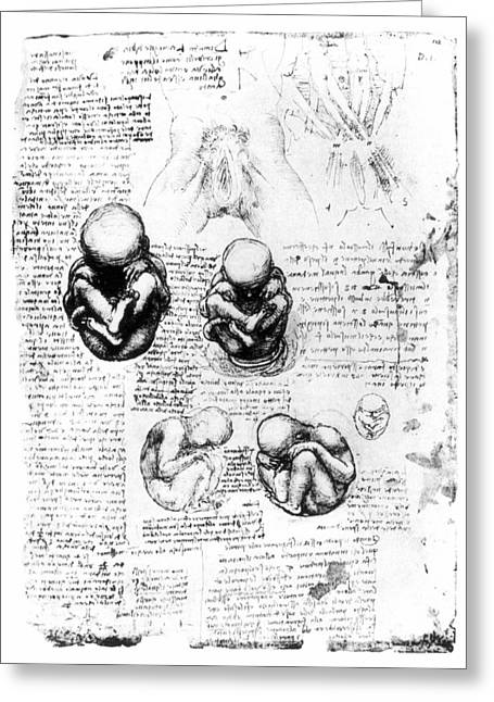 Leonardo: Anatomy Greeting Card by Granger