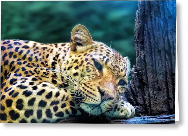 Greeting Card featuring the photograph Leopard 1 by Dawn Eshelman