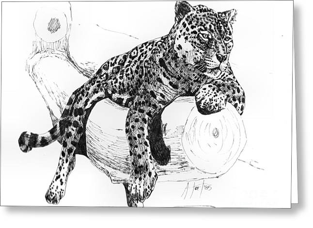 Leopard At Rest  Greeting Card by Audrey Van Tassell