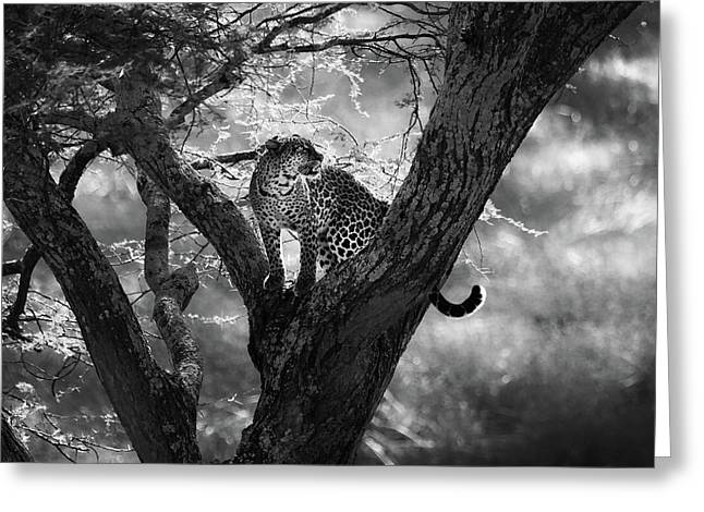 Leopard Greeting Card by Bjorn Persson