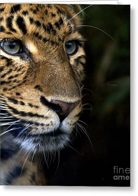 Leopard Cub Greeting Card by Louise Fahy