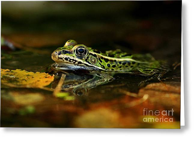 Leopard Frog Floating On Autumn Leaves Greeting Card by Inspired Nature Photography Fine Art Photography