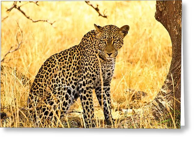 Leopard Greeting Card by Kongsak Sumano