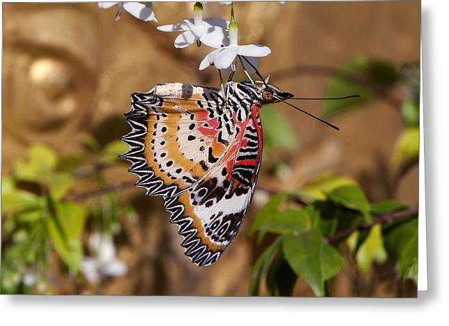 Greeting Card featuring the photograph Leopard Lacewing Butterfly Dthu619 by Gerry Gantt