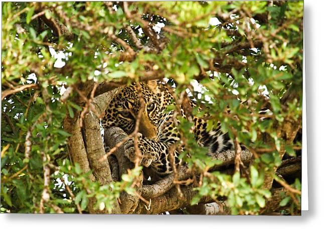 Leopard On Tree Greeting Card by Kongsak Sumano