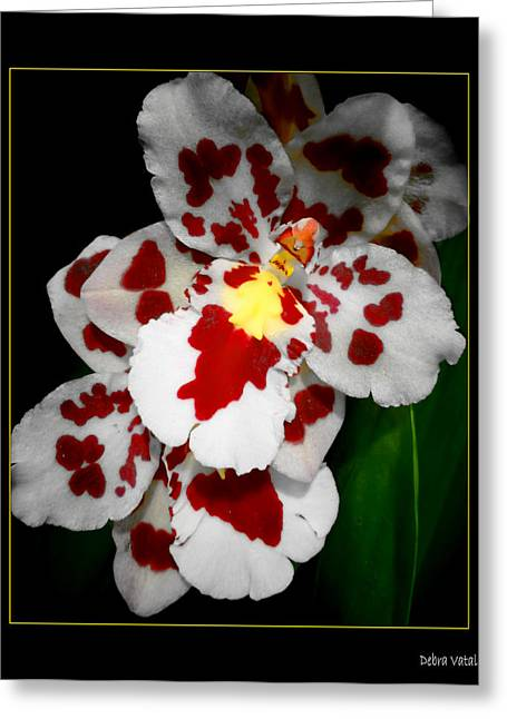 Leopard Orchid Greeting Card by Debra     Vatalaro