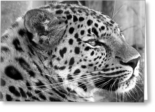 Leopard Profile Greeting Card by Karen E Phillips
