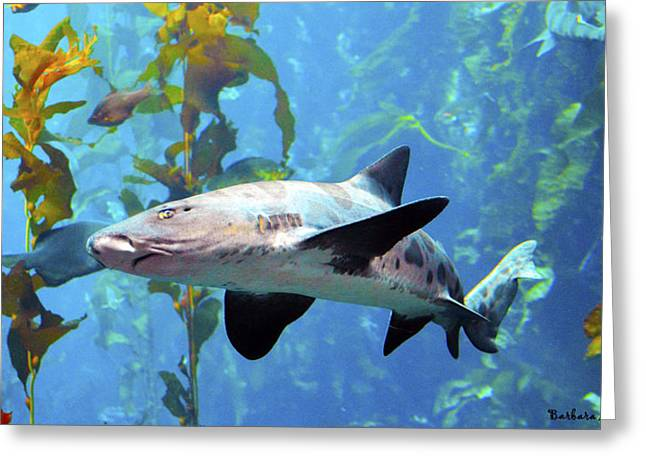 Leopard Shark Greeting Card by Barbara Snyder