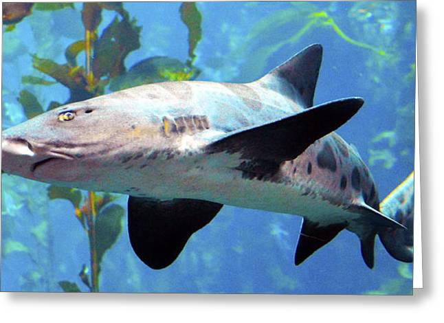 Leopard Shark Detail Greeting Card by Barbara Snyder