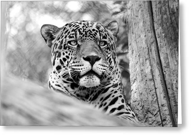 Leopards Don't Change Their Spots Greeting Card
